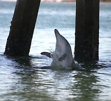 Dolphin Playing by Darren Williamson