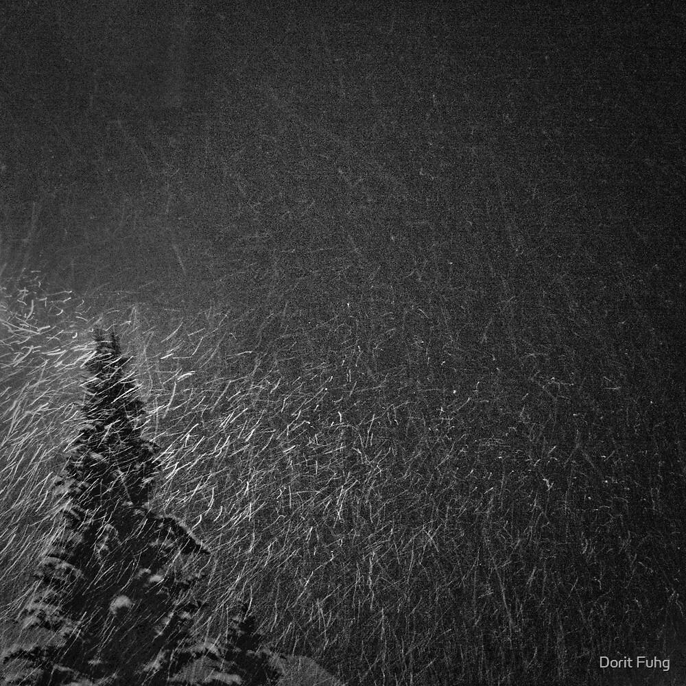 when night falls by Dorit Fuhg