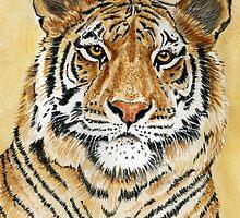 Tiger by FranEvans