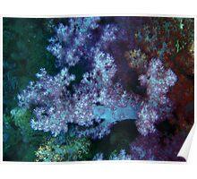 Multicoloured coral Poster