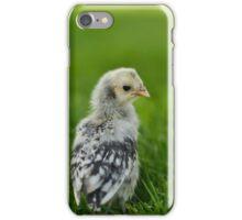 Baby Chick - Appenzeller Spitzhauben Silver Spangled  iPhone Case/Skin