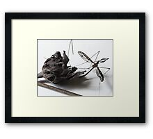 Fuschia and insect Framed Print