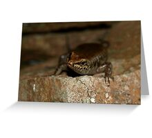 Eulamprus brachysoma Greeting Card