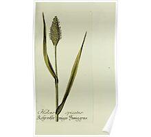 Plantarum Indigenarum et Exoticarum - Lukas Hochenleitter und Kompagnie 1788 - 267 Poster