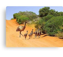Emu Family  Canvas Print