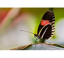 Butterfly resting Photographic Print