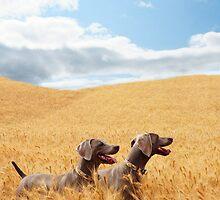 Wheat Wonderland by Mindy Wilson