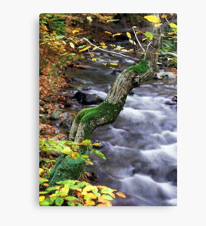 autumn poem Canvas Print