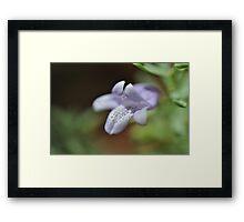 Mick Jagger Flower Framed Print