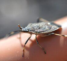 Bert the Beetle by Shane Meyer