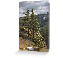 Trees in the mountains Greeting Card