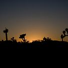 Joshua Trees in silhouette by Susan Leonard