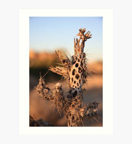 Dried Cactus Art Print