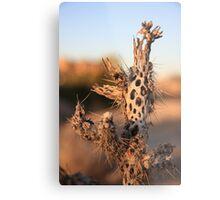 Dried Cactus Metal Print