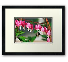 Bee and Bleeding Hearts Framed Print