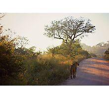 Morning Hunt Photographic Print