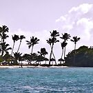 Beautiful Windswept Beach at St. Lucia by Memaa