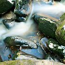 Woodland water at Glencree No1 by Martina Fagan