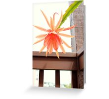 Bloomin' Cup 'N Saucer Greeting Card