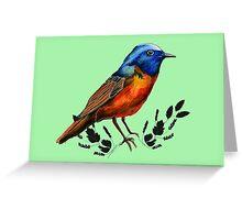 Redstart  - Bird Illustration Greeting Card