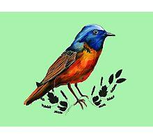 Redstart  - Bird Illustration Photographic Print