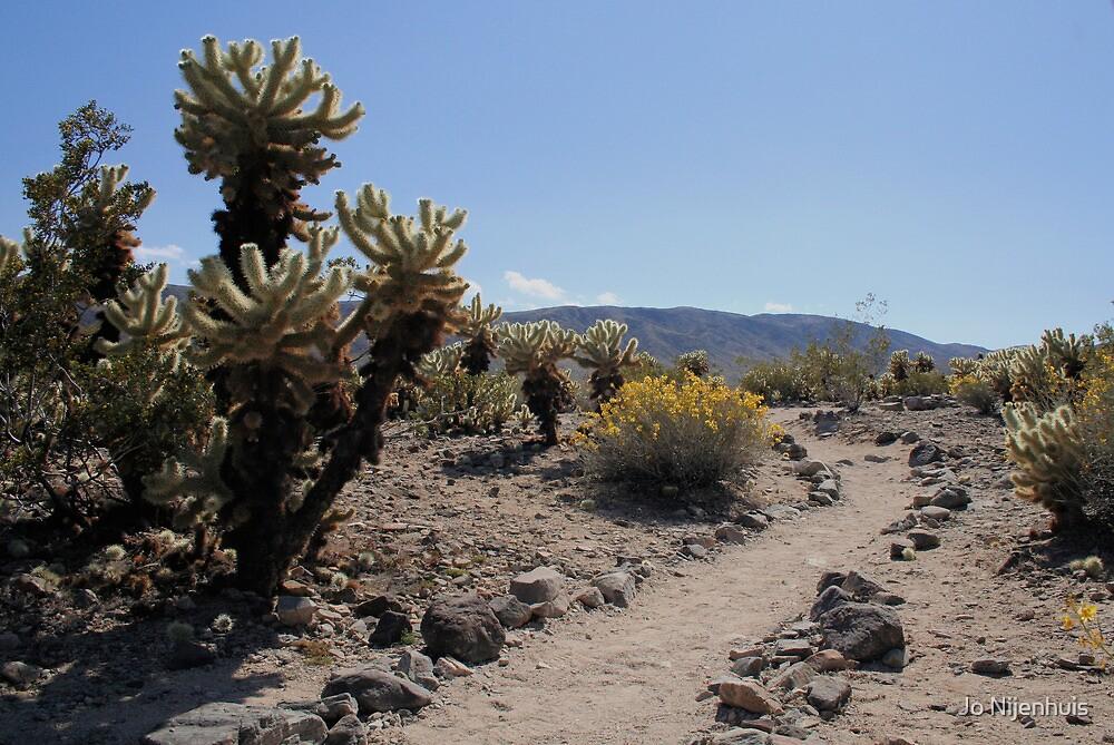 Cholla Cactus Garden by Jo Nijenhuis