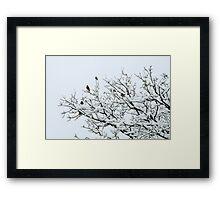 Snowy Perch Framed Print