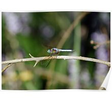 Very Colorful Dragon Fly Poster