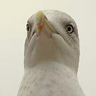 Beaky! by Franco De Luca Calce