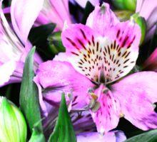 Summer flowers 3 Sticker