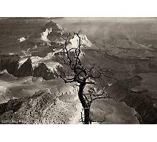 Tree: A Portrait Photographic Print