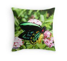 Male Cairns birdwing Throw Pillow