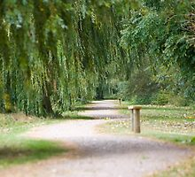 The Willow Tree Path by Hoodle-Hoo