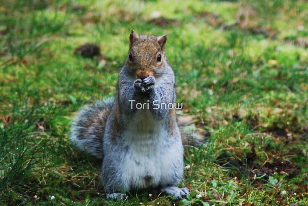 Friendly Squirrel  by Tori Snow