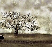 Barren by Stephen Warren