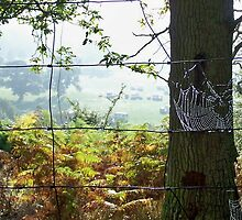 Morning Dew at Eastnor Park by LisaRoberts