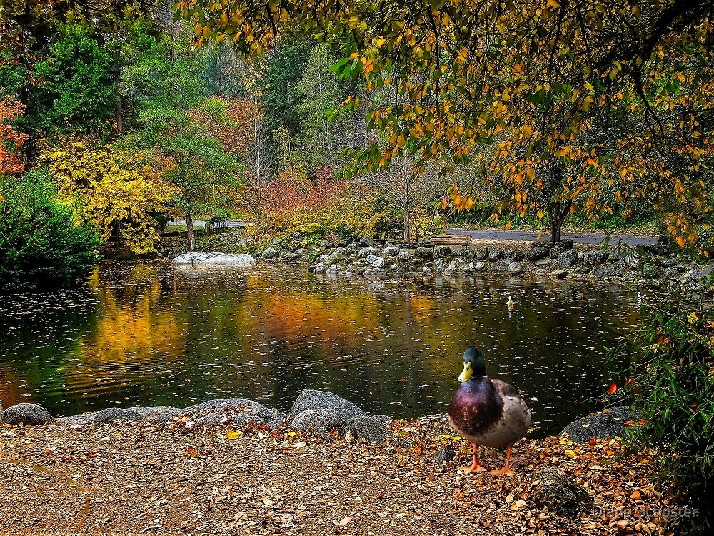 Autumn At Lithia Park Pond by Diane Schuster
