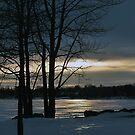 Winter Blues by Joanne  Bradley