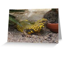 Uromastyx geyri Greeting Card