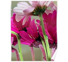 Canopy Of Daisies Poster
