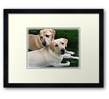 ~ My Babies  ~ Trooper & Rosie ~ Framed Print