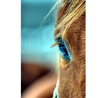 Horse Eye Photographic Print