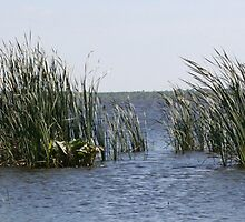reeds by Nicholas Caruolo