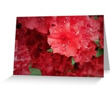 Red Azalea Greeting Card