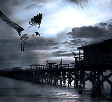 Night Landing by Stephen Warren