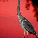 Blue Heron at Sunset by Daniel  Parent