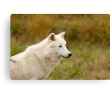 Arctic Wolf Close up  Canvas Print