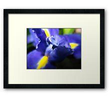 Ink Iris Framed Print