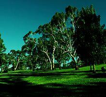 Arboretum 02 by Steven Maynard
