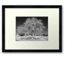Tree on Navajo Mountain Framed Print